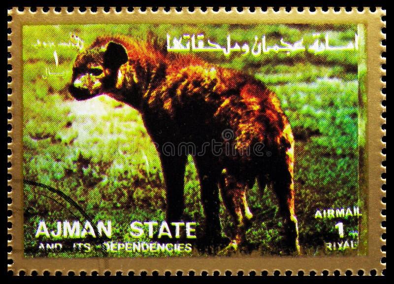 Carimbo impresso em Ajman (Emirados Árabes Unidos) mostra Spotted Hyaena (Crocuta crocuta), Mammals, serie de grande formato, cir foto de stock royalty free