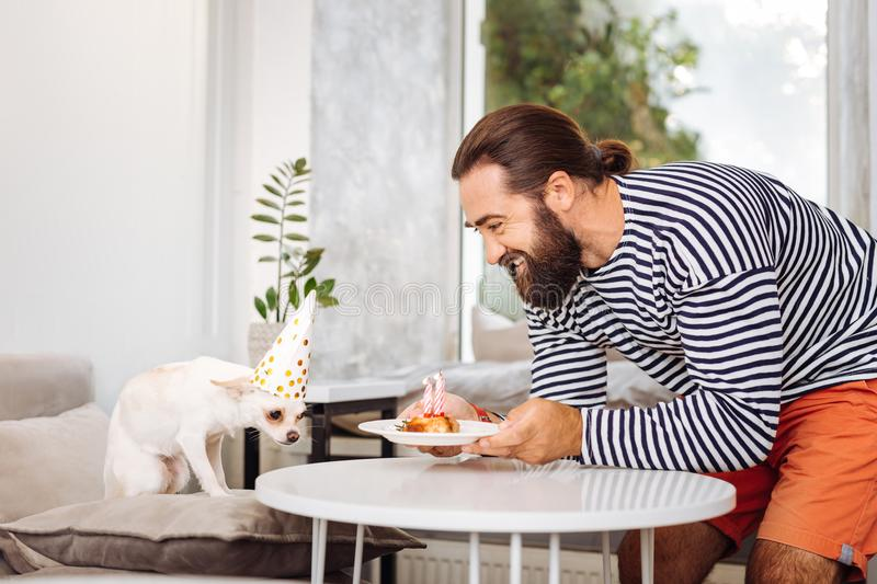 Caring bearded man bringing little plate with birthday cake for dog. Cake for dog. Caring bearded man feeling simply amazing while bringing little plate with stock images