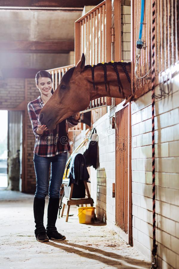 Caring horsewoman coming to stable for cleaning horse. Cleaning horse. Caring horsewoman wearing riding boots and squared shirt coming to stable for cleaning royalty free stock images