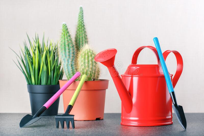 Caring for indoor plants. Hobby. cactus, succulent plant and tools royalty free stock photo