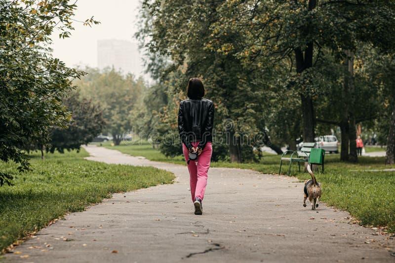 Carino beagle nel parco autunnale immagini stock