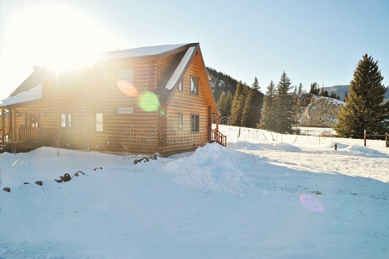 Carlingue dans la neige photo libre de droits
