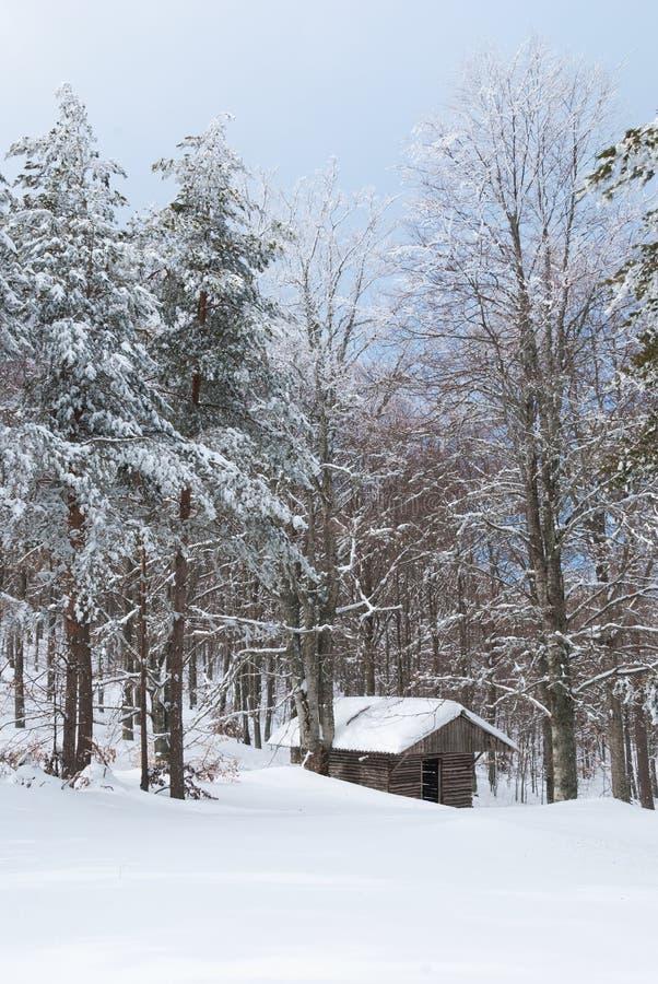 Carlingue de rondin dans une forêt neigeuse photo stock