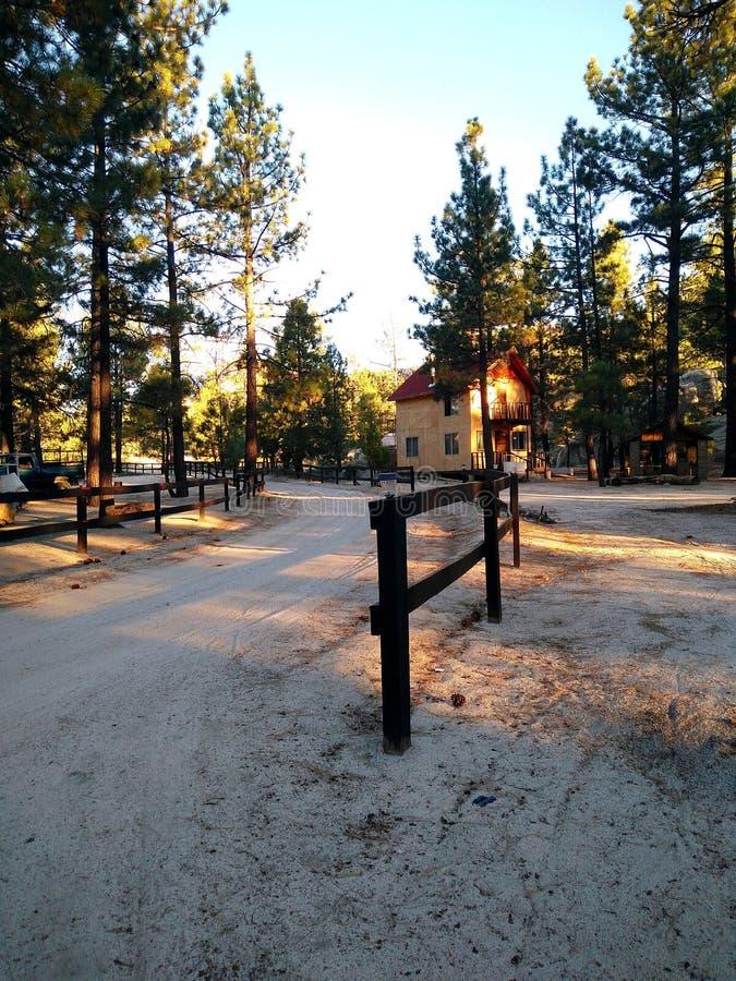 Carlingue sur les bois images libres de droits