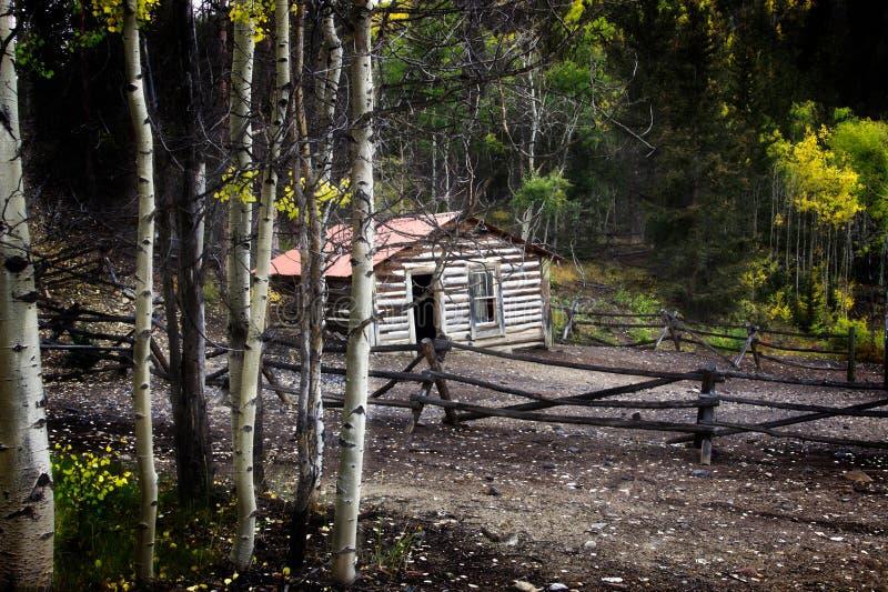 Carlingue vivant profondément dans les bois photographie stock