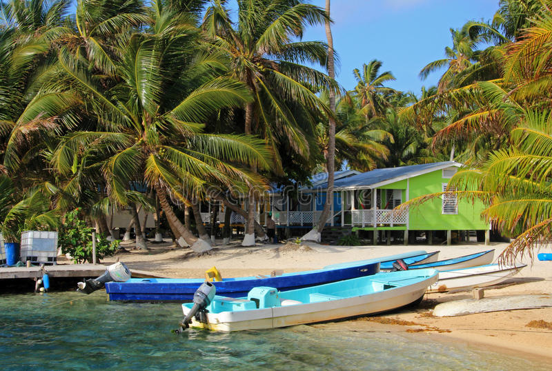 Carlingues sur des échasses sur la petite île du tabac Caye, Belize photographie stock libre de droits
