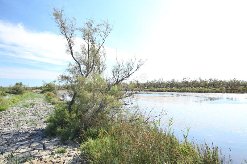 Carmargue marshland. A landscape view of the delta or marshland of Carmargue, mouth of the Rhone River in Southern France stock photography