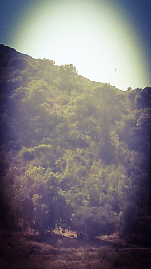 carmel山 免版税库存照片