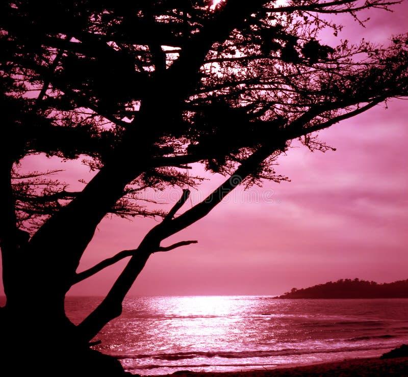 Download Carmel, California stock photo. Image of tree, peace, silhouette - 250838