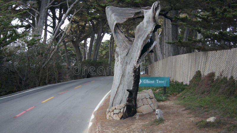 CARMEL, CALIFORNIA, UNITED STATES - OCT 6, 2014: Pescadero Point at 17 Mile Drive, is known as Ghost Tree. It gets, its royalty free stock image