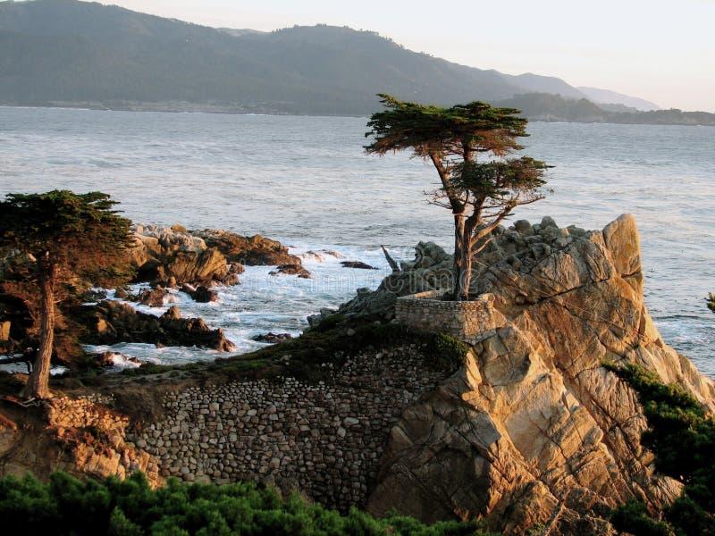 Carmel Cypress fotos de archivo libres de regalías