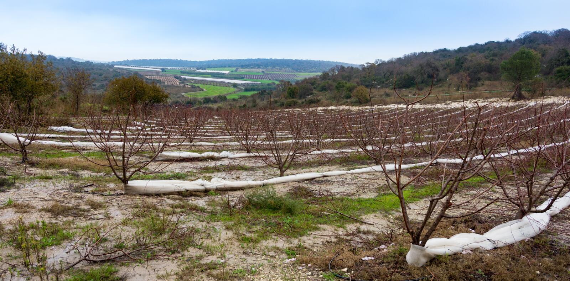 Carmel e la Galilea più bassa fra Zihron Yaakov, Nazaret, Safed, immagine stock libera da diritti