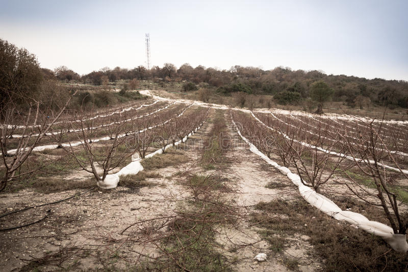 Carmel e la Galilea più bassa fra Zihron Yaakov, Nazaret, Safed, immagine stock