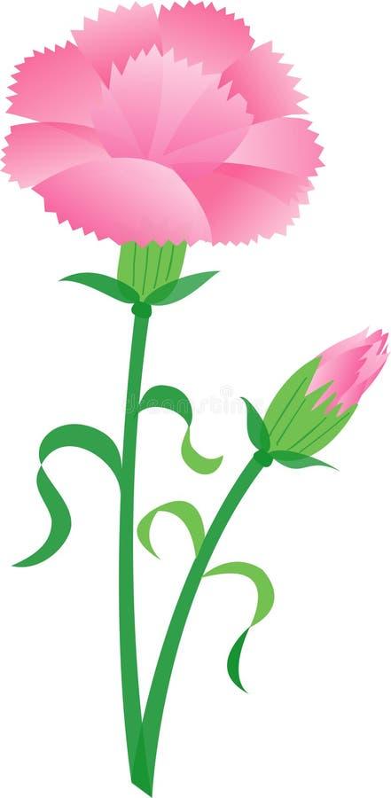 Carnation vector illustration