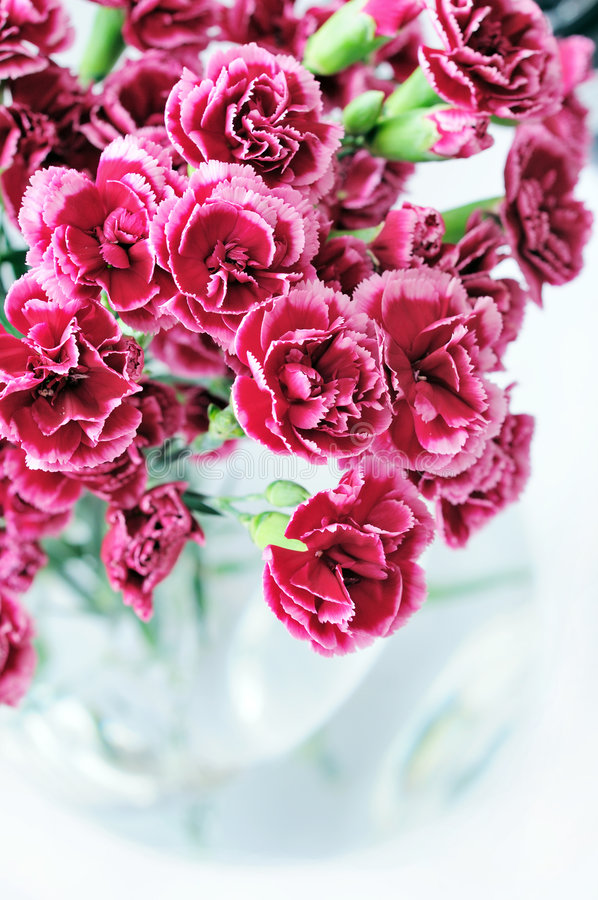 Carnation Bouquet In Vase Royalty Free Stock Photography