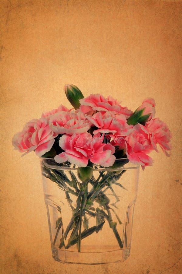 Carnation flower on vintage grunge paper. Background royalty free illustration