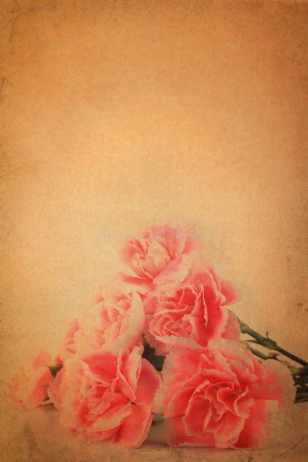 Carnation flower on vintage grunge paper. Background vector illustration