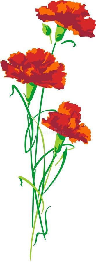 Free Carnation Flowers Stock Image - 1236381