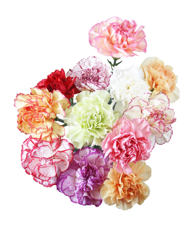 Carnation Flowers royalty free stock images