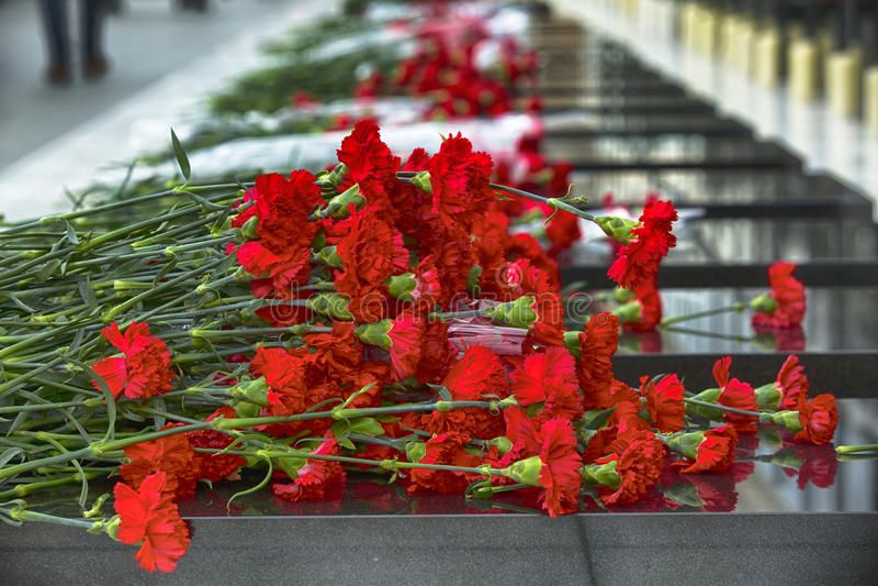 Carnation flowers symbol of mourning.  royalty free stock image