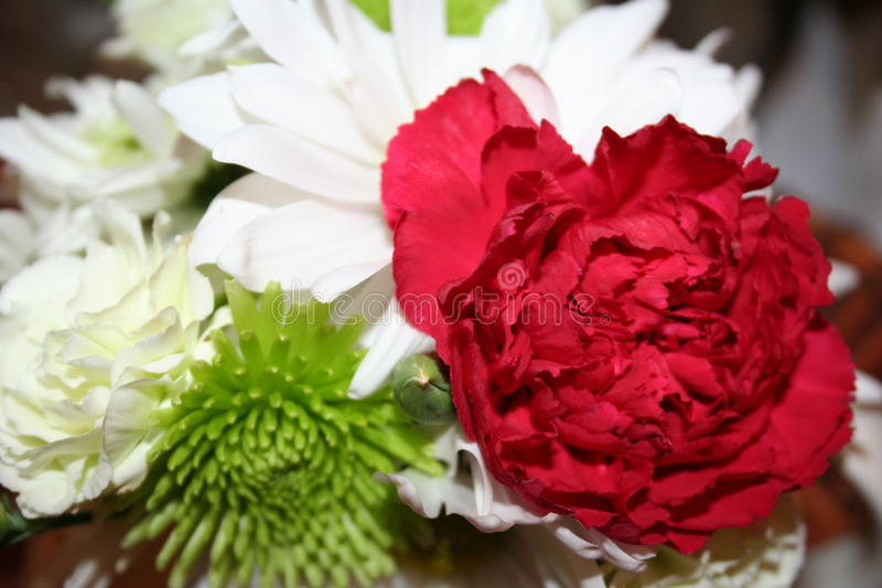 Carnation on the Side stock photography