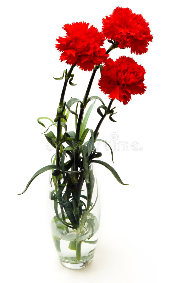 Free Carnations Royalty Free Stock Image - 2183626