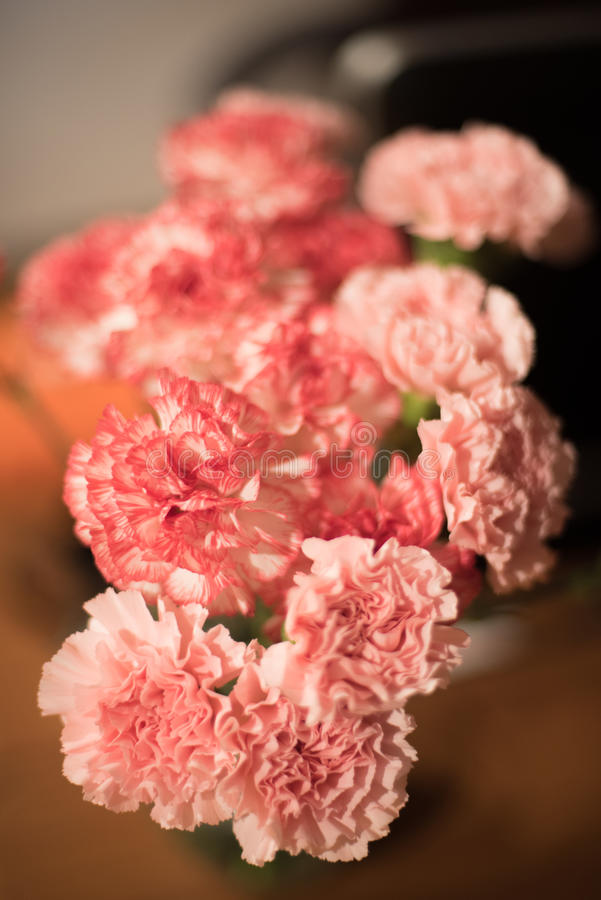 carnations imagem de stock