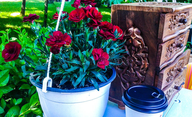 carnations foto de stock royalty free