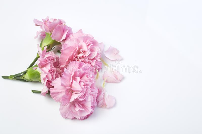 carnations flower for Mother's day royalty free stock images