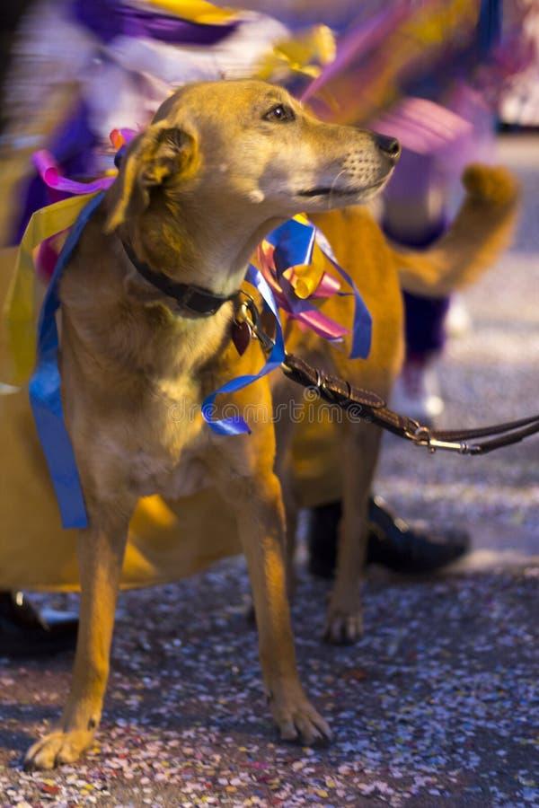 Download Carnaval de Viareggio foto editorial. Imagem de cão, partido - 29832711