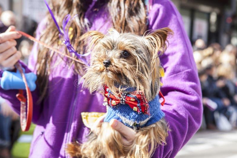 Carnaval weinig hond royalty-vrije stock foto's