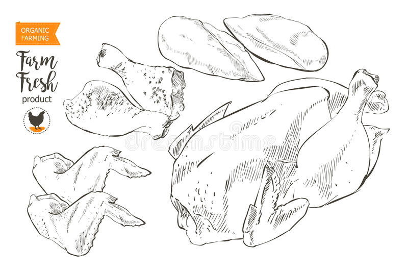Carne da galinha ilustração royalty free
