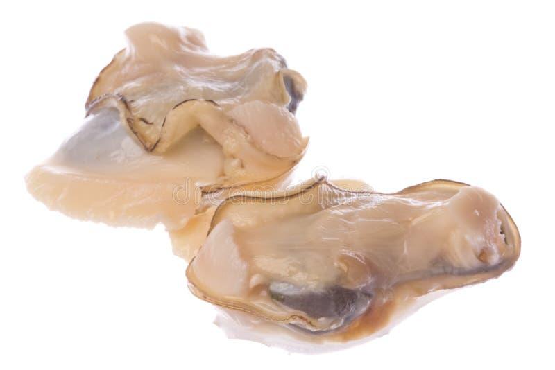 Carne dos moluscos de Lokan do pântano dos manguezais foto de stock