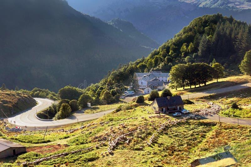Carneiros com as casas da exploração agrícola no contryside foto de stock
