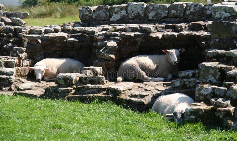 Carneiros da parede de Hadrian imagens de stock royalty free