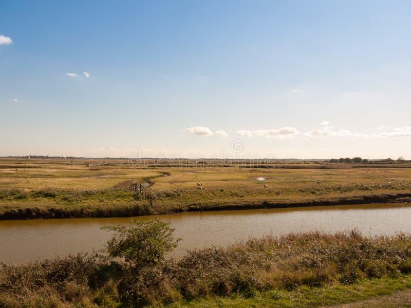 Carneiros e cordeiro da cena do córrego do rio através da maneira no reser da natureza imagem de stock