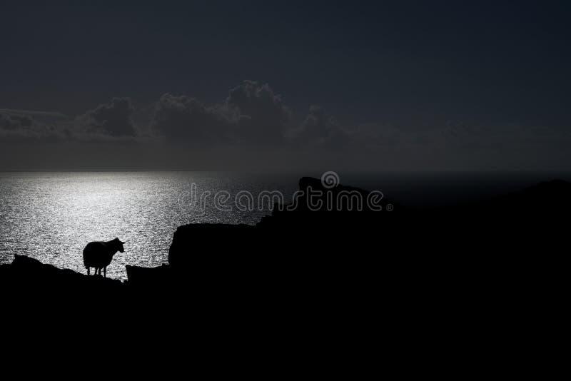 Carneiros na borda de um penhasco, Irlanda foto de stock royalty free