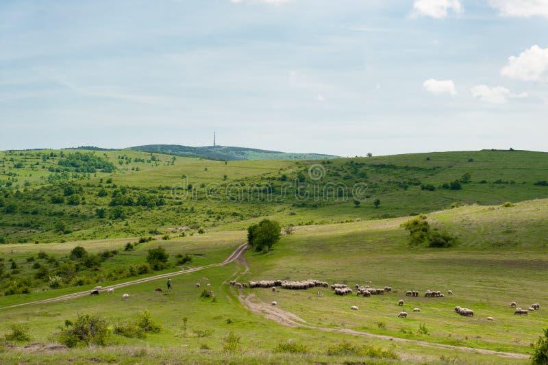Carneiros, natureza e paisagem em Bulgária Céu azul nebuloso fotos de stock royalty free