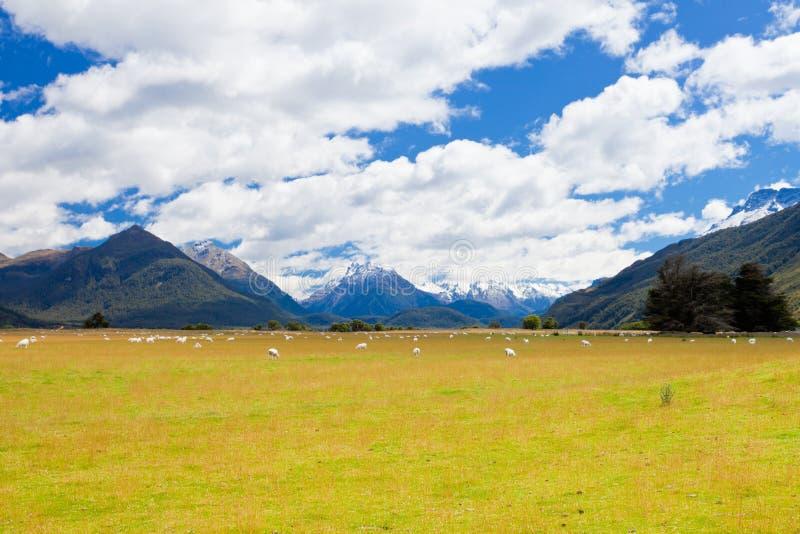 Carneiros, picos e Mt NP de aspiração, alpes do sul NZ fotos de stock royalty free