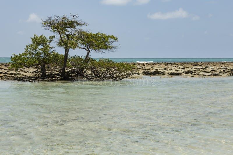 Carneiros strand i Porto de Galinhas, Recife, Pernambuco - Brazi royaltyfri bild