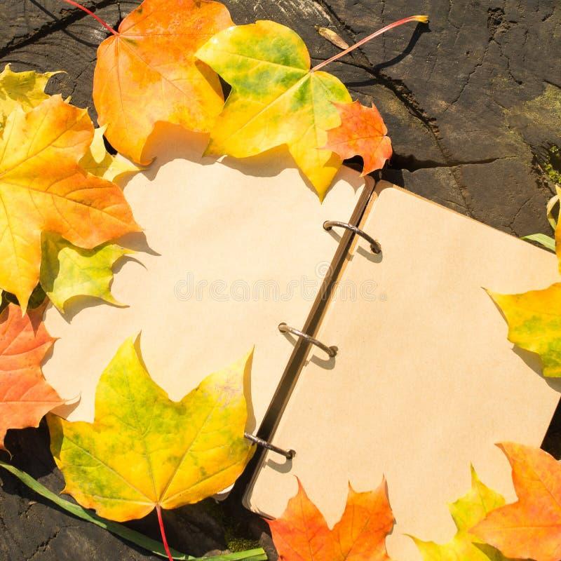 Carnet de vintage sur le tronçon avec des feuilles d'automne d'érable photos libres de droits