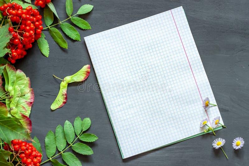 Carnet, feuilles et baies de sorbe carrés sur un conseil foncé Fond avant le 1er septembre De nouveau ? l'?cole image libre de droits