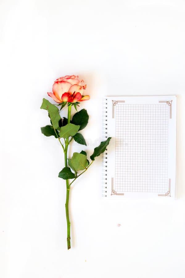 Carnet quotidien de rose d'amour et de rose sur un fond de livre blanc pour le jour du ` s de Valentine photos stock