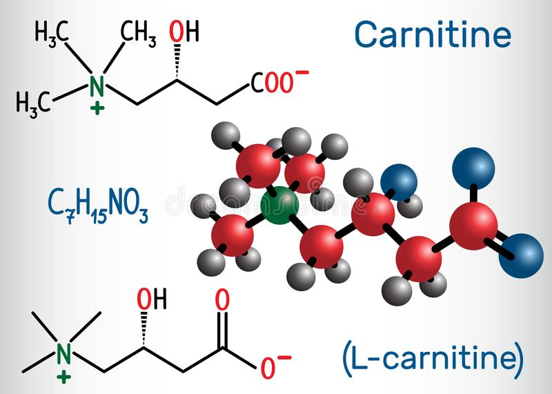 CarnitineL-carnitine molekyl Strukturell kemisk formel royaltyfri illustrationer