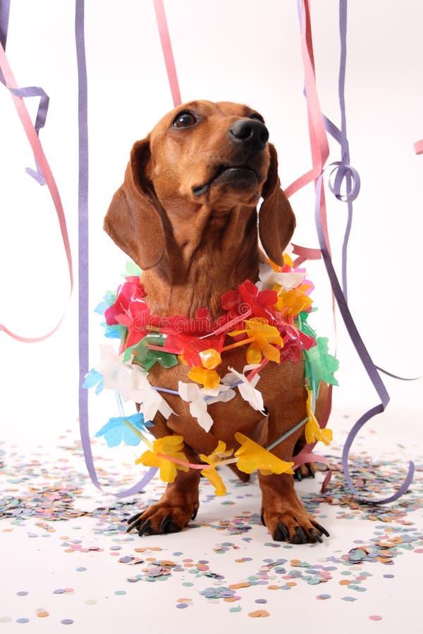 Carnival dog party stock photos