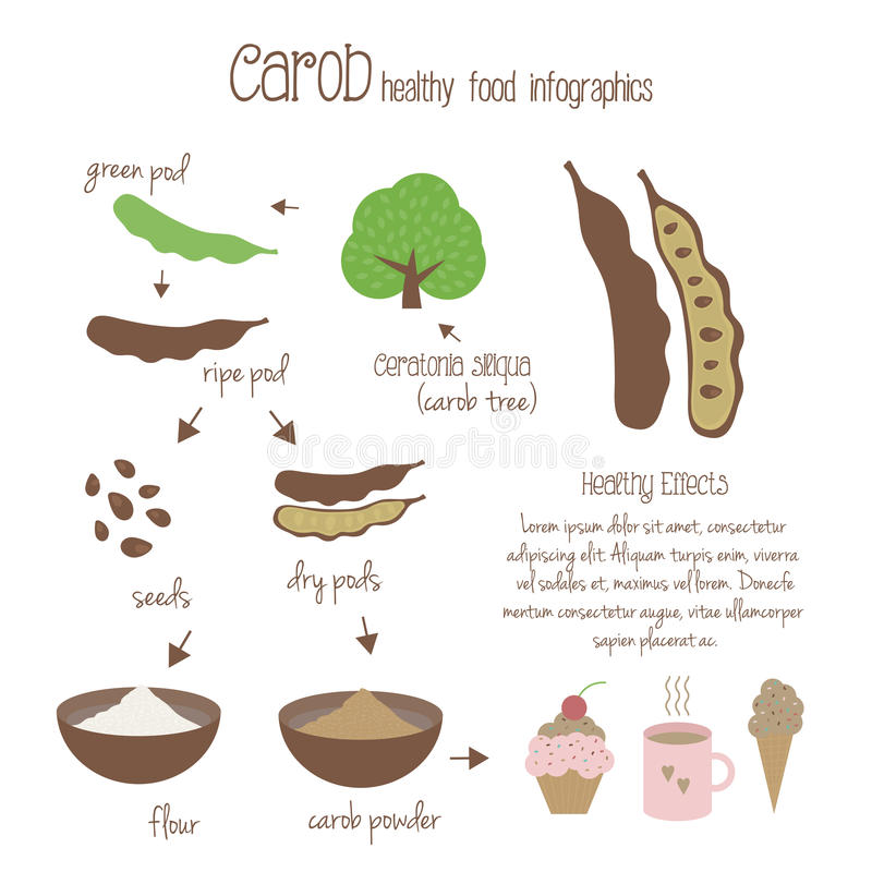 Carob infographics. Vector illustration. Carob infographics. Production of carob, use in cooking. Tree, pods, seeds and carob powder. Vegetarian decaffeinated royalty free illustration