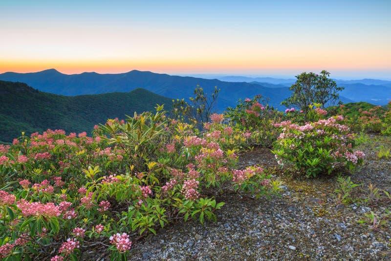 Carolina Blue Ridge Mountain Laurel del norte imagen de archivo