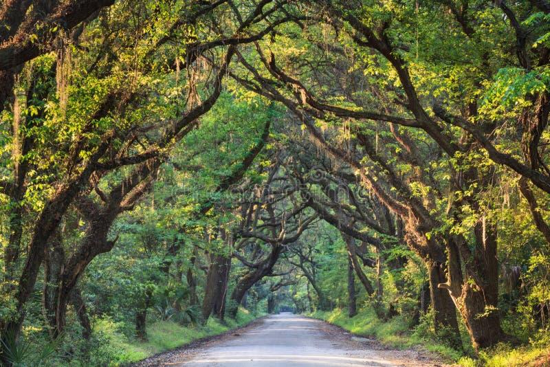 Carolina Lowcountry Back Roads sul fotografia de stock royalty free