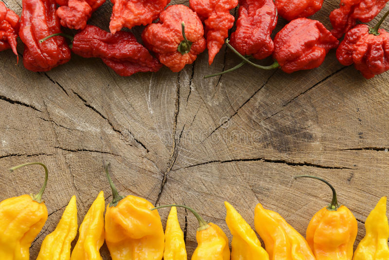 Carolina reaper and fatalii hot peppers. Carolina reaper and fatalii extreme hot peppers on a wooden background arranged at the top and bottom with space for royalty free stock images