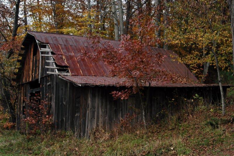 Download Carolina sen zdjęcie stock. Obraz złożonej z kolor, jesienny - 25582